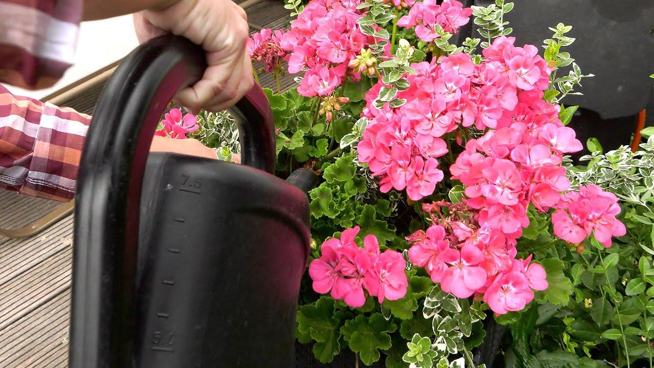 Lipiec w ogrodzie. Kalendarz ogrodnika na 13.07 - 19.07. Prace ogrodnicze w lipcu