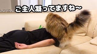 猫のマッサージ屋さん...