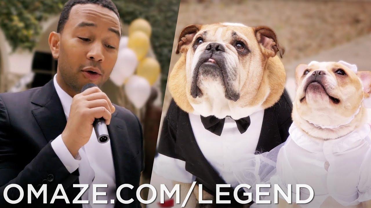 John Legend Dog Wedding (for Charity)