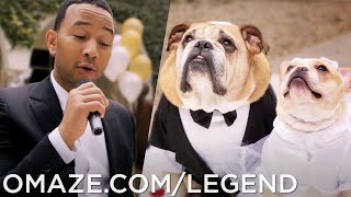 John Legend Dog Wedding (for Charity)