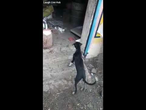 Street Cat vs Street Dog Fight | Who Will Win || Laugh Live Hub