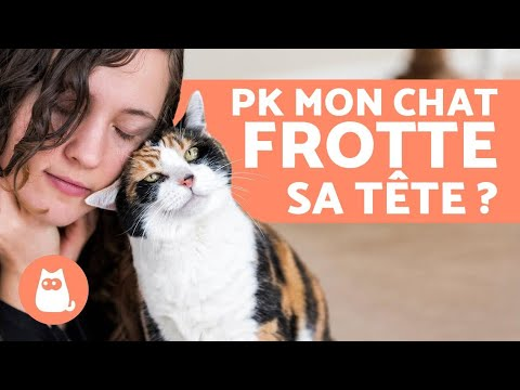 Pourquoi Mon Chat Frotte Sa Tête Contre La Mienne ?