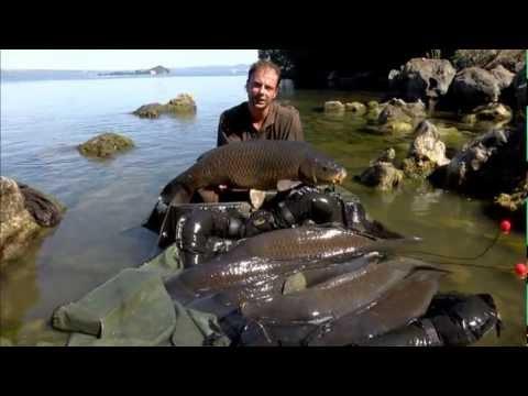 Kkarp   Tecniche di pesca   Bolsena un vulcano di carpe