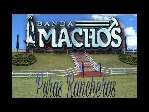 Banda Machos-Puras Rancheras