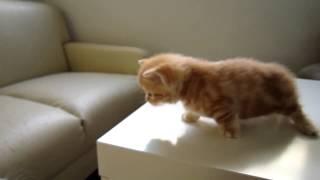 求救的小貓