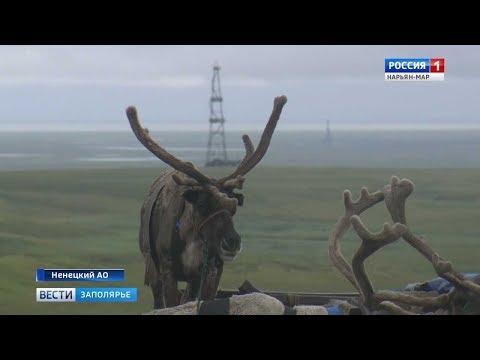 Вести Заполярья от 10 августа 2018 г. День оленя: как кочевники Ненецкой тундры ометили свой главный праздник
