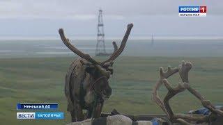 День оленя: как кочевники Ненецкой тундры ометили свой главный праздник