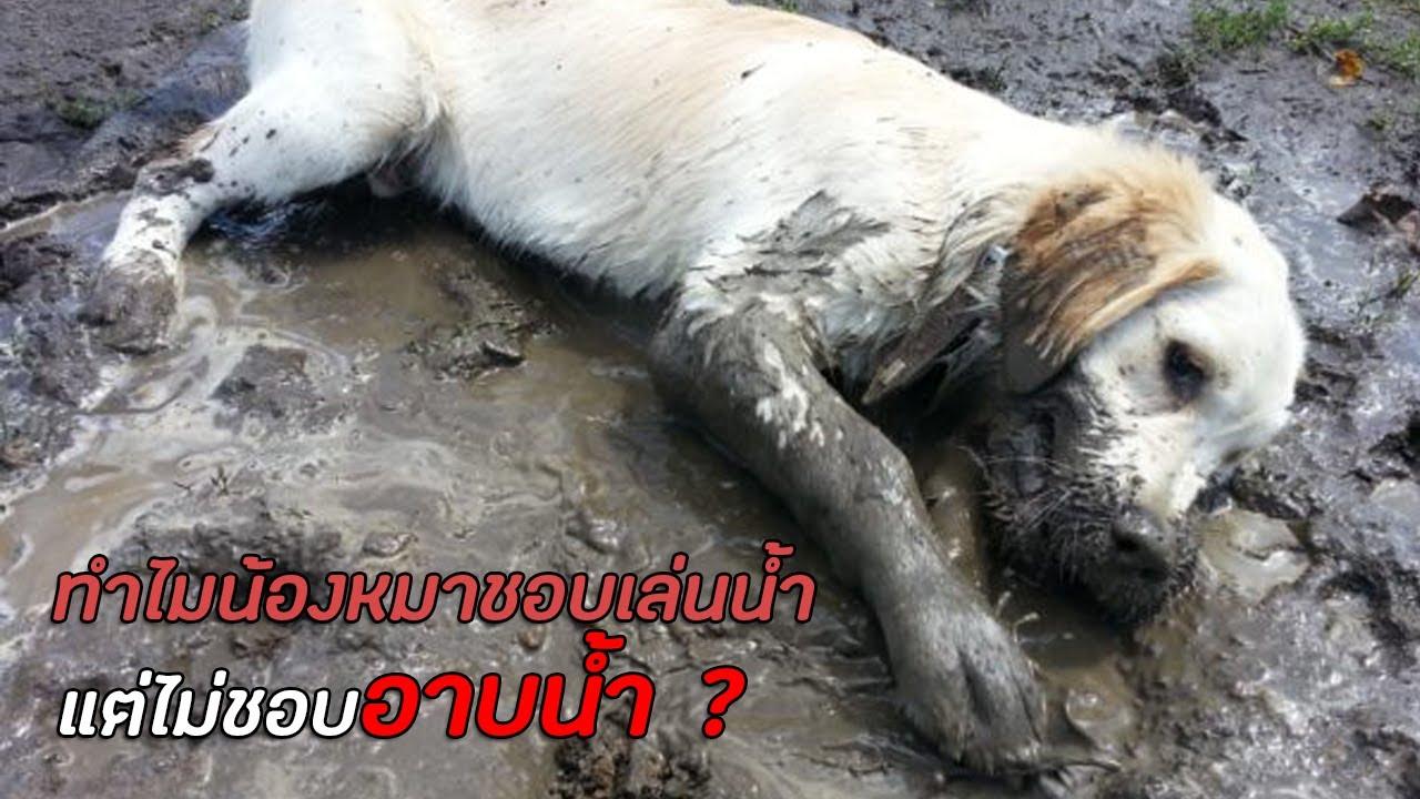 ทำไมน้องหมาถึงไม่ชอบอาบน้ำ แต่ชอบเล่นน้ำกันนะ !?