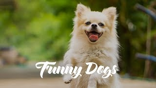 Cute and Funny Dogs 2019