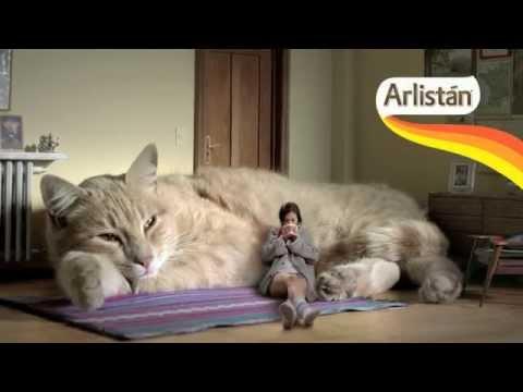 Видео огромные коты