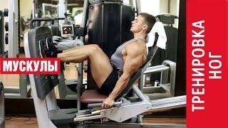 Как накачать МЫШЦЫ НОГ? Комплекс упражнений для мощных ног!(Какие существуют упражнения для мышц ног? Техника тренировки ног на сушке. Крутые мышцы ног БЕЗ СТЕРОИДОВ!..., 2014-09-30T07:21:01.000Z)