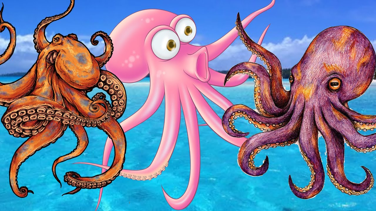 Octopus cartoons