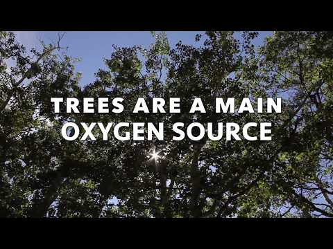 TREES  ARE A MAIN OXYGEN SOURCE (high resolution)