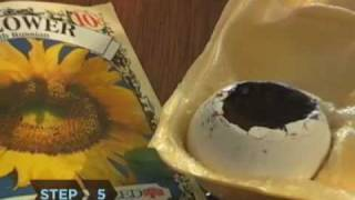 How to Start Seeds with Eggshells