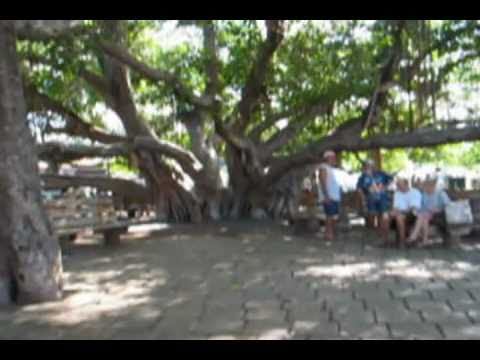 BanyanTree in Lahaina, Maui