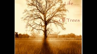 """THE SECRET LIFE OF TREES"" RELAX and CHILL OUT to 75 mins of original music by Tracy Bartelle"