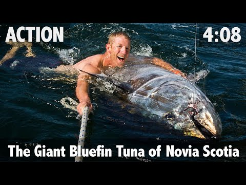 The Giant Bluefin Tuna of Nova Scotia - ULTIMATE FISHING TV