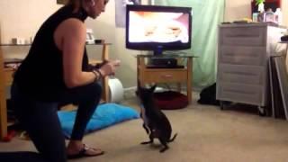 Asl-our Dog Smart Asl Training