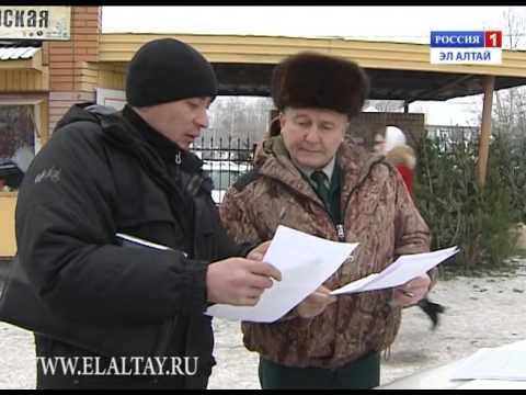 Смотреть онлайн В Горно-Алтайске работает 7 точек по продаже новогодних елок