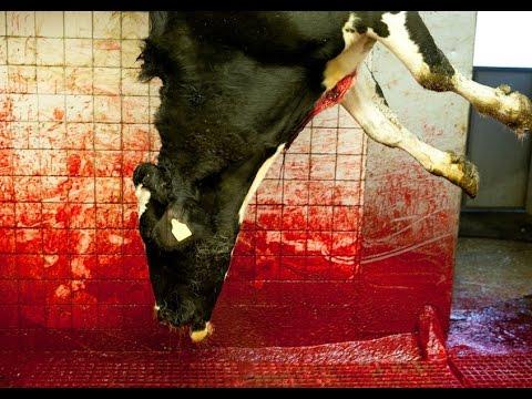 Brutality to  animal