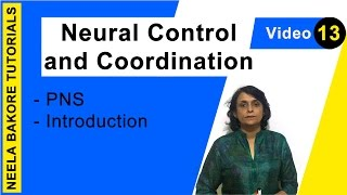 Neural Control and Coordination - PNS - Introduction