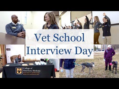 VET SCHOOL INTERVIEW DAY | BellaVet