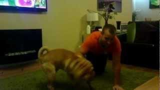 Shar-pei Bruno Attacking Me ;)