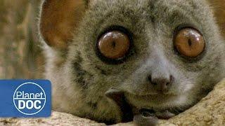 Madagascar. The World of the Lemurs (Documentary Part 2)