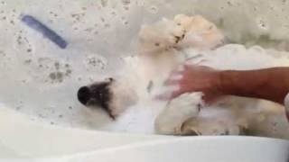 casper the bath loving dog