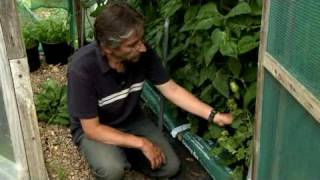 Kitchen Garden magazine: Growing Tomatoes