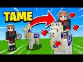 How To Tame/Ride/CONTROL/Decorate Llamas In Minecraft PE!