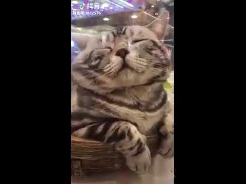 Cat Series: When a big big cat is sleeping