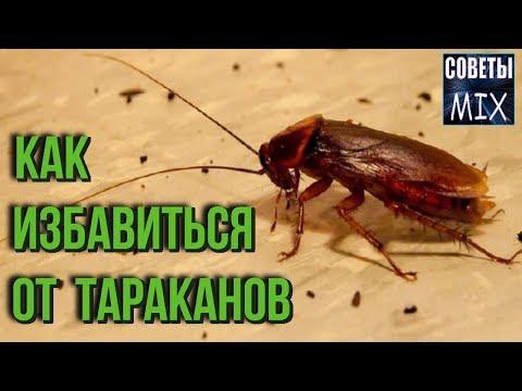 Как избавиться от тараканов навсегда. На удивление простой и надежный способ без химии