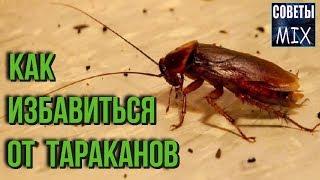 видео Как избавиться от тараканов народными средствами: лучшие рецепты, полезные советы