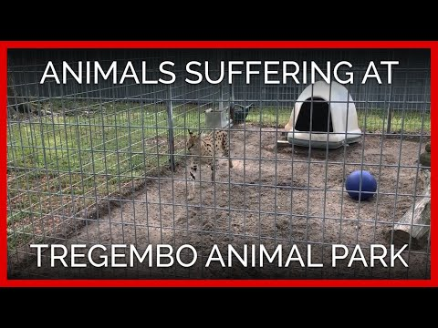 Animals Suffering at Tregembo Animal Park