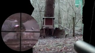 Pest Control With Air Rifles - Scope Cam Squirrel Shooting - An Element Of Luck