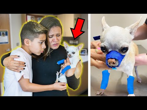 We RUSHED Our DOG To The HOSPITAL Again.. (PRAY FOR PRINCESA) 💔 | The Royalty Family