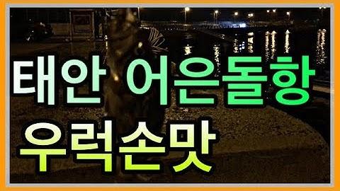 태안 어은돌항/6월 중순 내항 낚시
