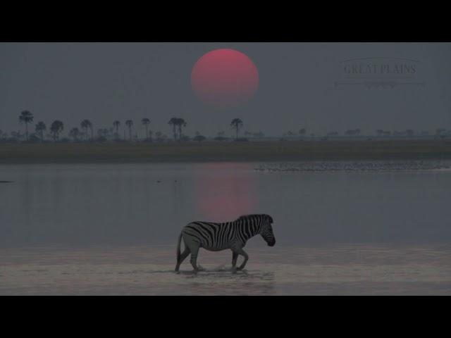 GREAT PLAINS - Nostalgic Botswana