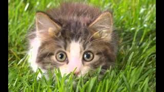 Сказка для детей: Котенок Барсик