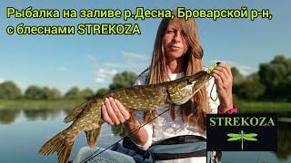 Рыбалка на блесны STREKOZA ловля щуки и окуня на Десне в Броварах ловля щуки и окуня осенью сентябрь