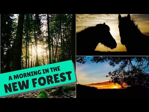 AMAZING SCENES FROM NEW FOREST NATIONAL PARK!