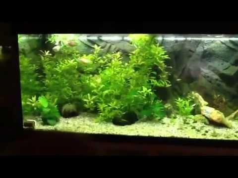 3 weeks old aquarium 240 liter youtube. Black Bedroom Furniture Sets. Home Design Ideas