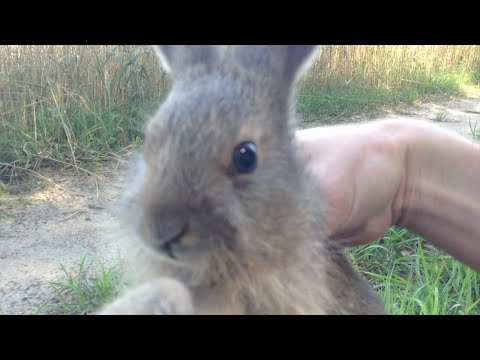 Brief tutorial on catching a rabbit