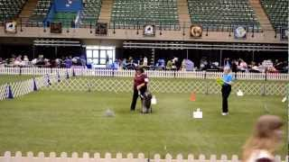 Sara Rudolph And Zeebee Aka Graphic Silversaga In Rally Novice At Poodle Club Of America