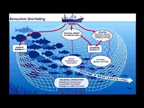 Causes And Effects Of Overfishing