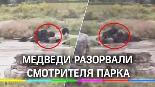 Видео: медведи разорвали человека на глазах у посетителей парка в Шанхае