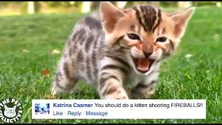 Смешное Видео Приколы про Кошек №2 Декабрь 2015