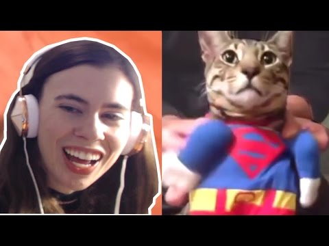 TRY NOT TO LAUGH CHALLENGE - FUNNY CATS FAILS COMPILATION