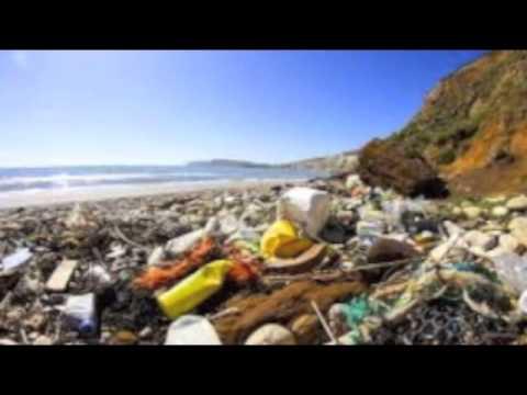 Marine Ecology PSA